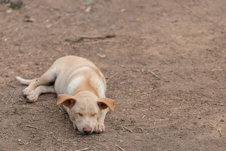 The puppy sleeps on the ground, waiting for the owner with blur background