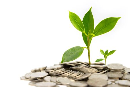Financial business growth Tree and coin concept on white background