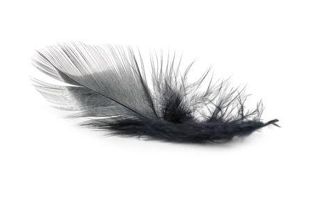 textura de plumas negras sobre fondo blanco Foto de archivo