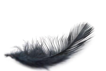 black feather texture on white background Stok Fotoğraf