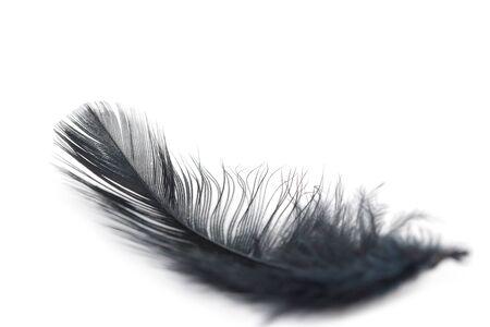 black feather texture on white background 版權商用圖片