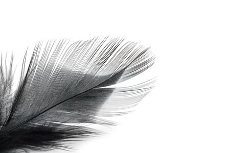 black feather texture on white background Reklamní fotografie