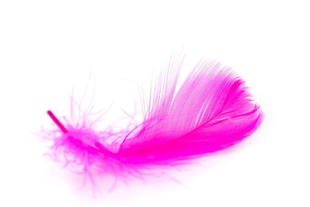 Pink feather texture on white background