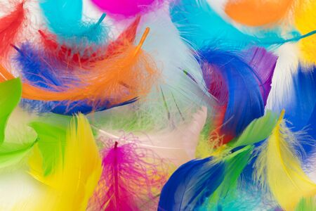 Many colorful feather texture background
