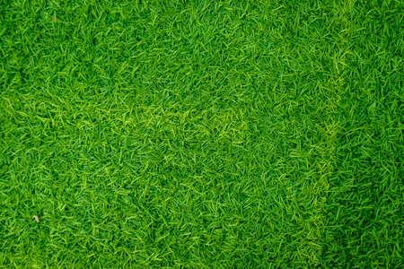 Green artificial grass natural