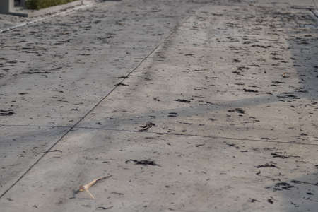 Air Pollution of Ashes from burnt Plant, Grass on the Village road