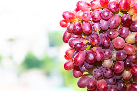 fresh red grape with water drop isolated on natural background
