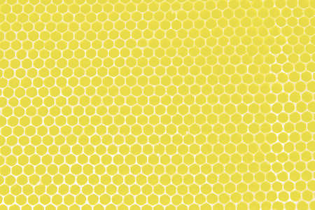 Yellow honeycombs for bees photo