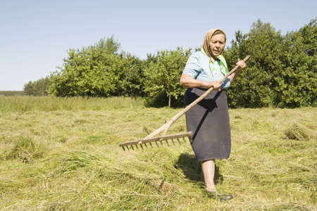 The old woman on the nature in the field with a rake works in the summer Stock Photo - 7166908