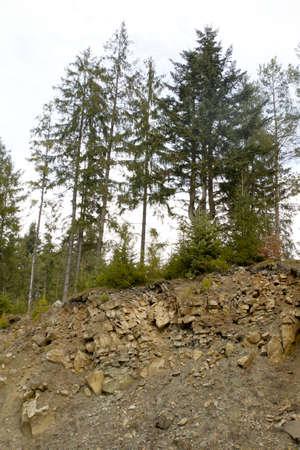 breakage: Rotura con piedras en el que crecen �rboles diferentes Foto de archivo