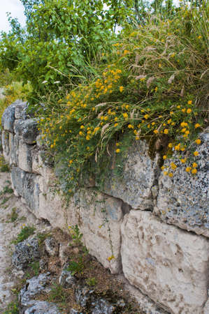 Flowers on a stone wall photo
