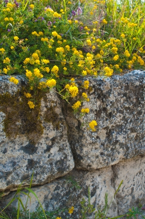 Flowers on a stone wall