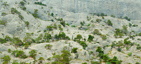 Trees in the rock
