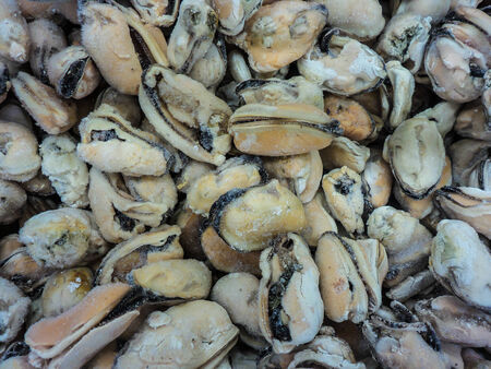 background of frozen mussels
