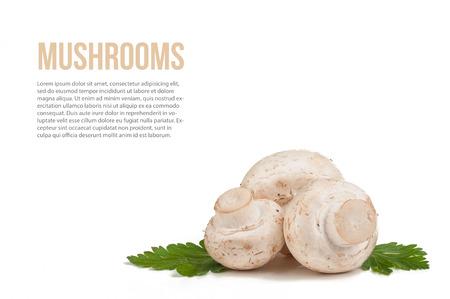 mushrooms on white