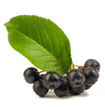 chokeberry isolated on white background