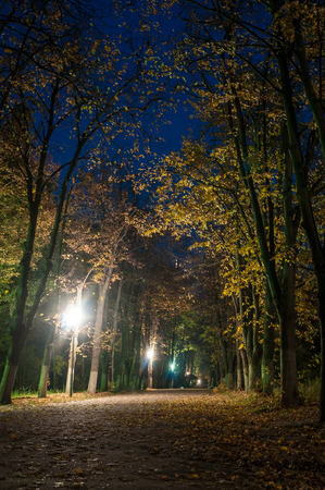 Night park in autumn photo