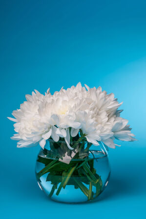 bouquet of white chrysanthemums in small round vase Stockfoto