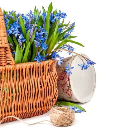 bifolia in basket isolated on a white background Stock Photo