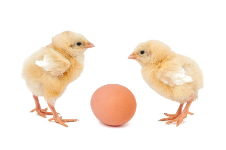 Two chicken and egg isolated on white  Stock Photo