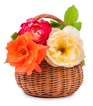 shrub roses in basket isolated on white background Stockfoto