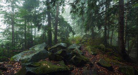 dense forest: fog in dense forest Stock Photo