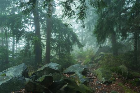 dense: fog in dense forest Stock Photo