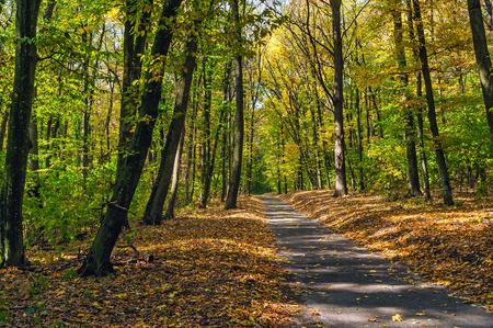 秋の森のパス