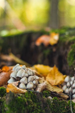 森の切り株にキノコ 写真素材