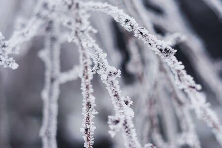 枝を固定背景 写真素材