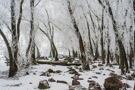 氷の地殻で冬の森 写真素材