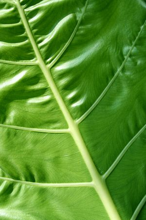 photo of a close-up and detailed leaf