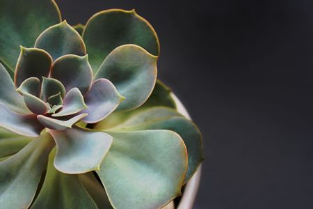 photo of a green succulent plant