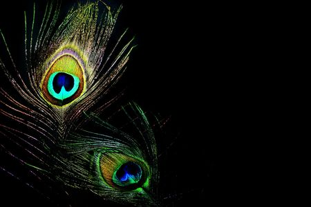 peacock eye: dancing queens - peacock feathers with lots of space for text and copy