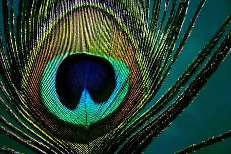 hair feathers: eye of a peacock feather - detail