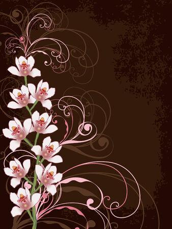 Orquídeas blancas con remolinos y el marco rosados del grunge Foto de archivo - 2118134