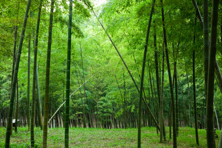 bamboo stick: This photo shoot in Chinese garden, summer time. Stock Photo