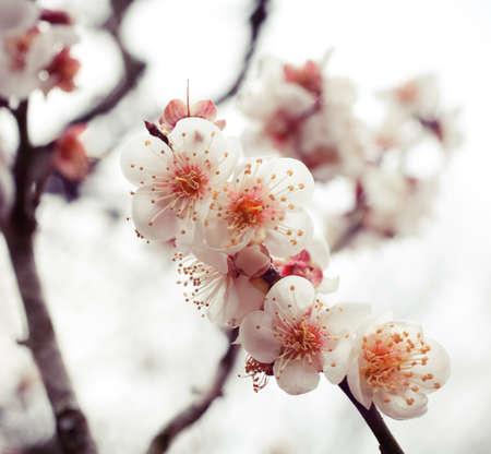 Beautiful flower shoot at Japan Tokyo in winter.