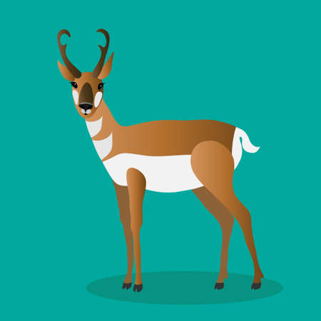 Pronghorn standing on a green background. Animals of north america.
