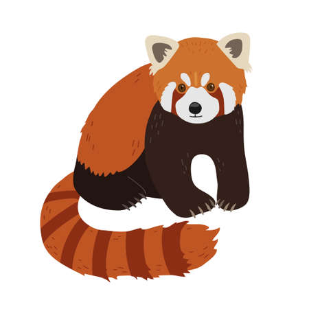 Red panda in a realistic style sits on on a white background. Chinese animals. Vektoros illusztráció