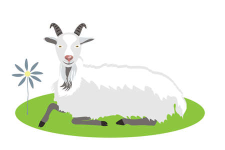 White goat lies on a green lawn. Farm animals Ilustração