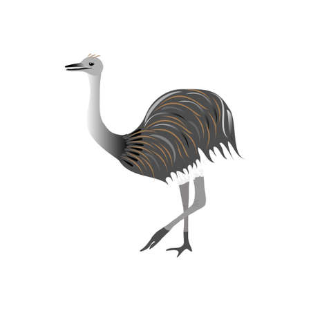 Ostrich nandu stands on a white background. Animals of South America.