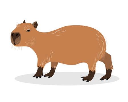 Capybara on a white background. Animals of South America. Ilustração