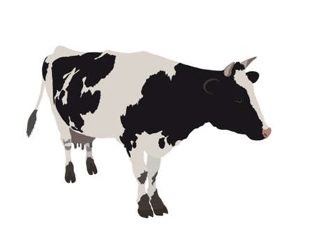 Vector cow in realistic style on a white background. Black and white cow. Banco de Imagens - 152896540