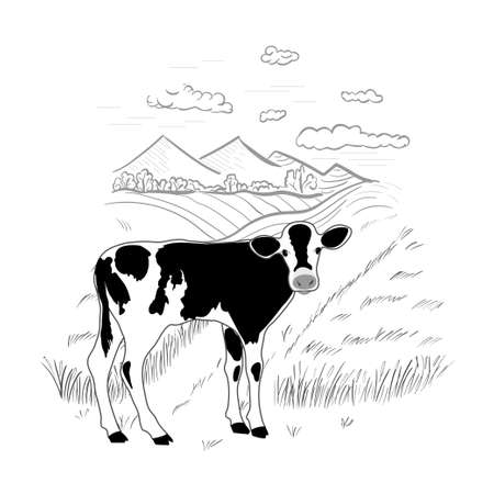 Black and white calf on a rural background. Cow standing. Hand drawn landscape.