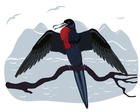 Christmas frigatebird. The bird sits on a branch with its wings spread. Endemic to Christmas Island. Australian bird. 向量圖像