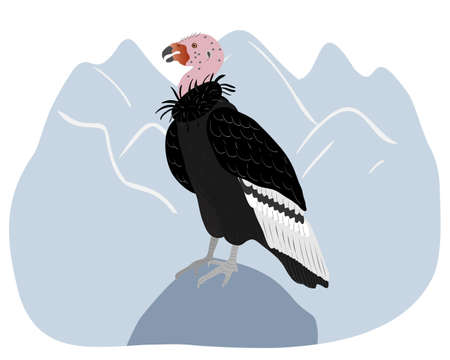 California condor sitting on a blue mountain landscape. Animals of North America.