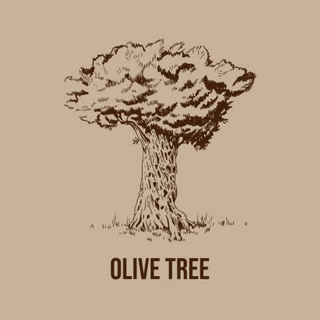 Hand drawn vector olive tree in vintage style. Monochrome sketch. Banco de Imagens - 154768080
