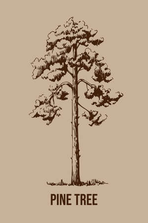 Hand drawn  pine tree in vintage style. Monochrome sketch. Banco de Imagens - 155186767