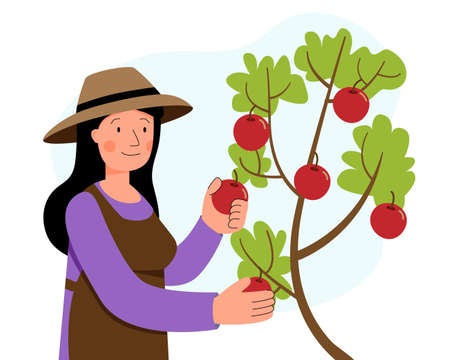 Woman picks apples from a tree in the garden. Gardening. Farming.